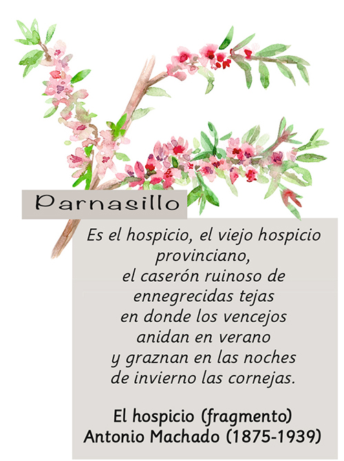 Parnasillo Agosto 2018