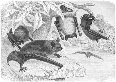 Se reunirán en Gibraltar expertos en murciélagos