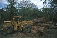 Araucaria XXI:  el reto de la sostenibilidad  en América Latina