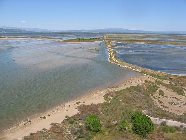 Panorámica de la Punta de la Banya, en el Delta del Ebro (foto: Cristina Sánchez / SEO BirdLife).