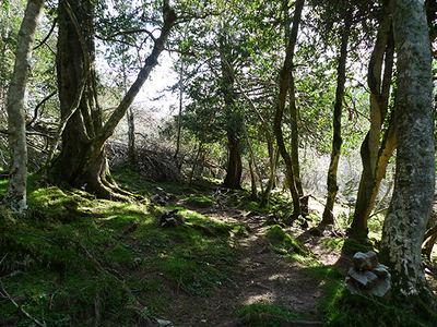 Zona de las Tejedas del Sueve (Asturias) por donde transcurre anualmente el trail del Sueve (foto: Ignacio Abella).