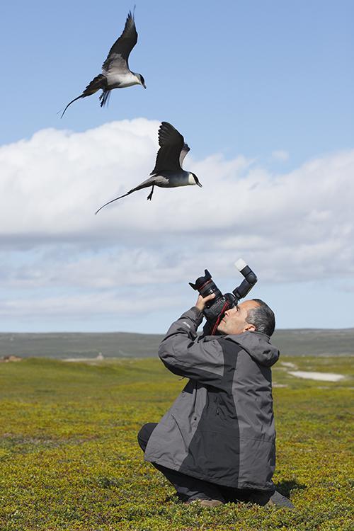 José Luis Gómez de Francisco, en el momento de fotografiar unos págalos raberos en la península de Varanger (Noruega).