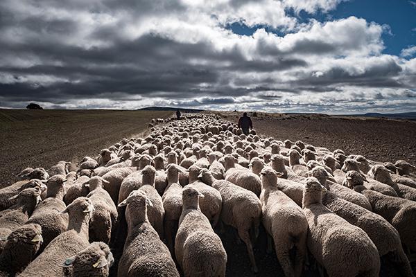 De cañadas, pastores y mujeres
