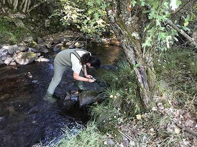 Una Agente Medioambiental busca indicios de presencia de desmán ibérico en un río de la provincia de León (foto: LIFE+ Desmania).