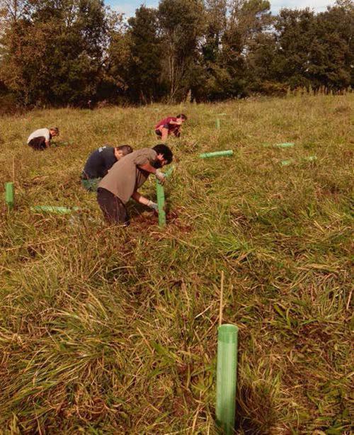 Llegan a España los 'bosques análogos' como herramienta de restauración