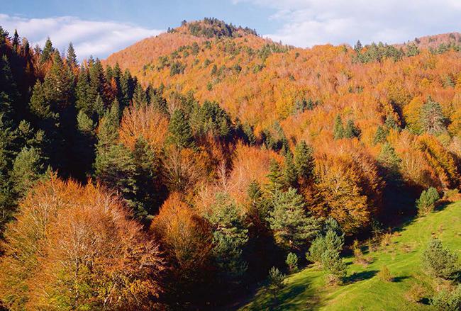 Panorámica otoñal de la selva de Irati, uno de los bosques emblemáticos del Pirineo navarro (foto: pedrosala / Shutterstock).