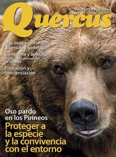 Oso pardo en los Pirineos. Proteger a la especie y la convivencia con el entorno.