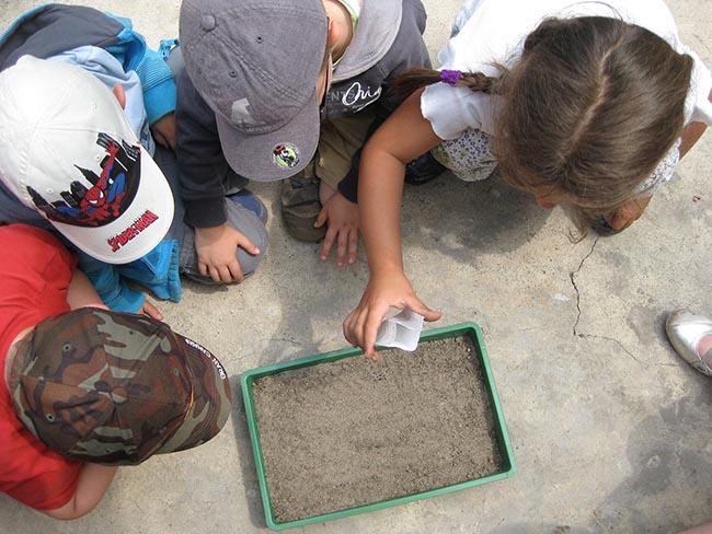 Un grupo de niños participa en una actividad de educación ambiental (foto: Pixabay).