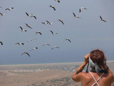 Una ornitóloga cuenta un bando de cigüeñas en migración en el observatorio de Cazalla, en Tarifa (Cádiz).