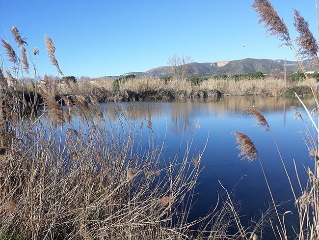 Panorámica de parte del humedal de l'Olla del Rei, en el delta del Llobregat (Barcelona).