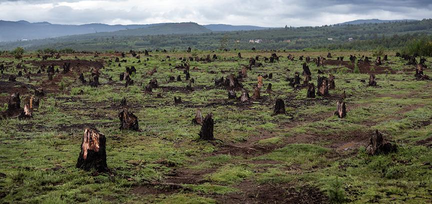 Declive sin precedentes de la biodiversidad, según el IPBES