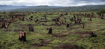 Tocones de un antiguo bosque de Madagascar destruido para extraer madera y ganar terreno agrícola (foto: Dudarev Mikhail / Shutterstock.com).