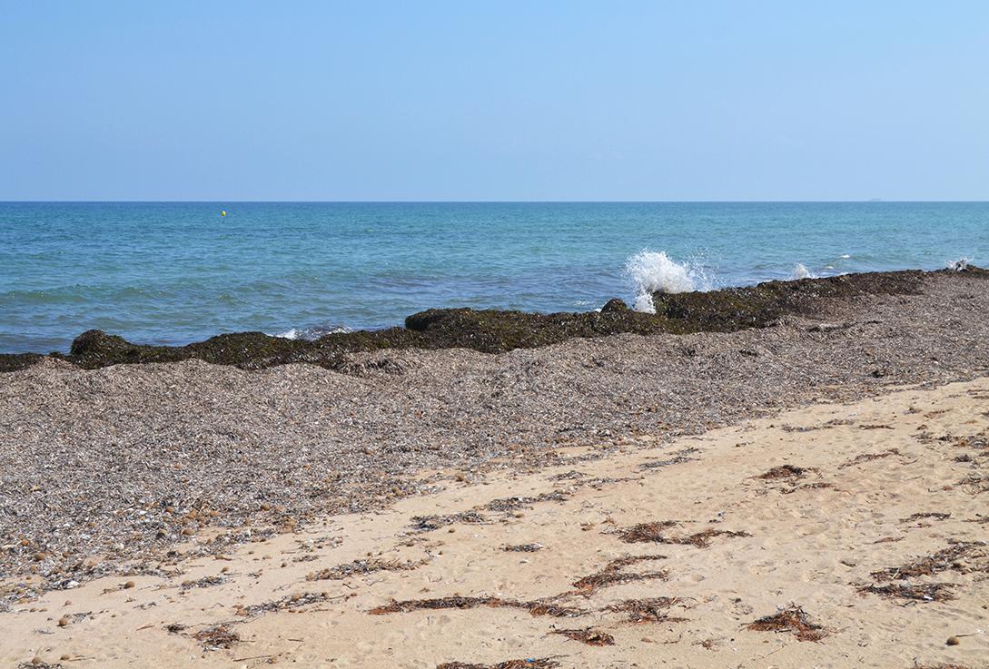 Aviso para los usuarios de las playas: los restos de posidonia no son basura