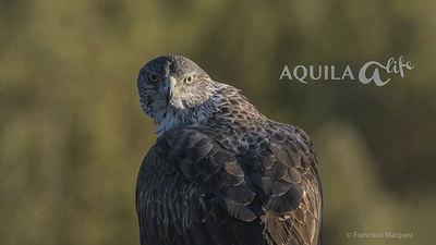 Imagen promocional del vídeo sobre el proyecto AQUILA a-LIFE (foto: Francisco Márquez).