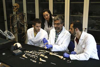 Estudio de un esqueleto de neandertal perteneciente a un individuo inmaduro, de 7'7 años de edad (foto: Grupo de Paleoantropología MNCN-CSIC).