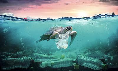 Una tortuga marina lleva una bolsa de plástico que ha identificado como alimento (montaje fotográfico de Romolo Tavani / Shutterstock).