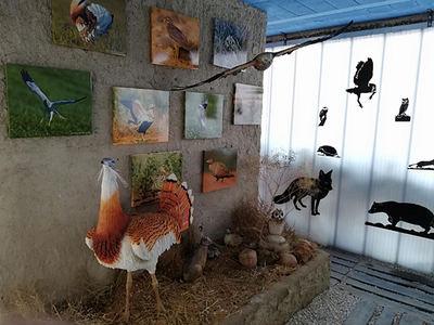 Réplicas a tamaño natural y fotografías de especies propias de las estepas cerealistas, en el Centro de Interpretación de Villalar de los Comuneros (Valladolid). Foto: Grefa.