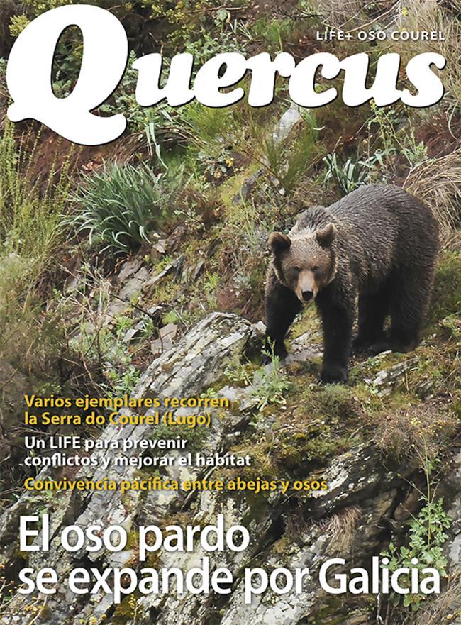 El oso pardo se expande por Galicia