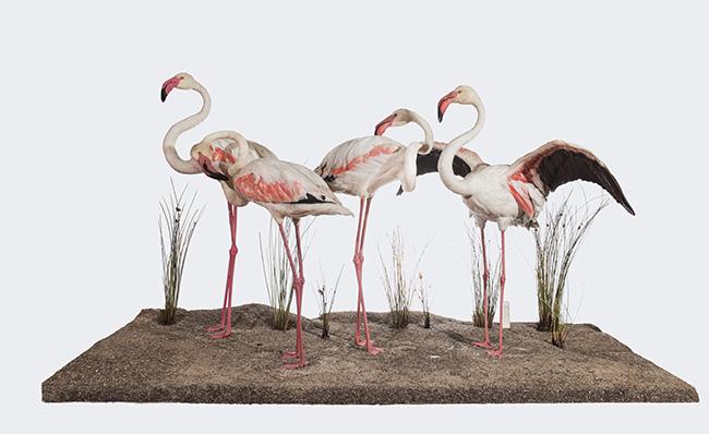 Las 'naturalezas recreadas' vuelven al Museo de Ciencias