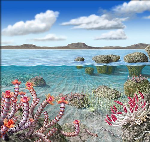 Recreación ecológica de un mar somero en el Ediacárico terminal, hace 500 millones de años, con Cloudina representada en el ángulo inferior izquierdo (ilustración: Antonio Grajera).
