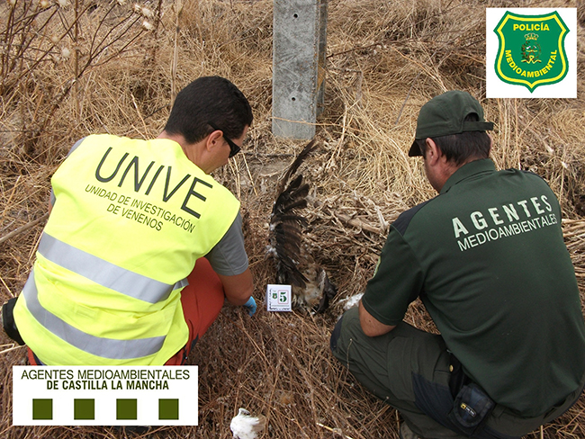 Un agente medioambiental y un miembro de UNIVE examinan los restos de un ave envenenada en Castilla-La Mancha (foto: APAM-CLM).
