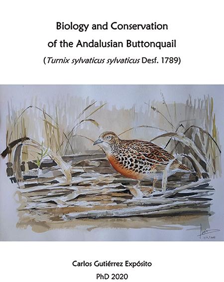 El más completo y actual estudio del torillo andaluz
