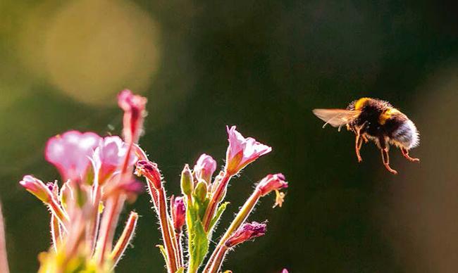 Tenemos mensaje de Ecologistas en Acción: 'Sin biodiversidad no hay vida'