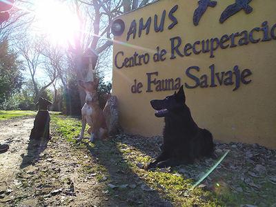 Unidad canina formada por tres perros que han superado un escrupuloso proceso de selección (foto: Amus).