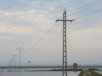 Tendido eléctrico de diseño peligroso para las aves situado en la Albufera de Valencia (foto: Adensva).