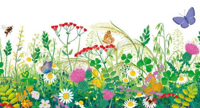 ¡Apúntate al primer biomaratón de flora!