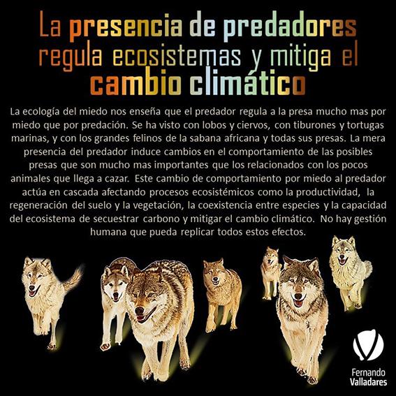 Una de las infografías de Fernando Valladares, dedicada al papel ecosistémico de la fauna depredadora.