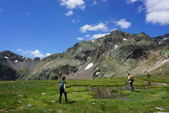 Muestreo en la Cordillera Cantábrica de anfibios afectados por el hongo Bsal (foto: Red Cambera).