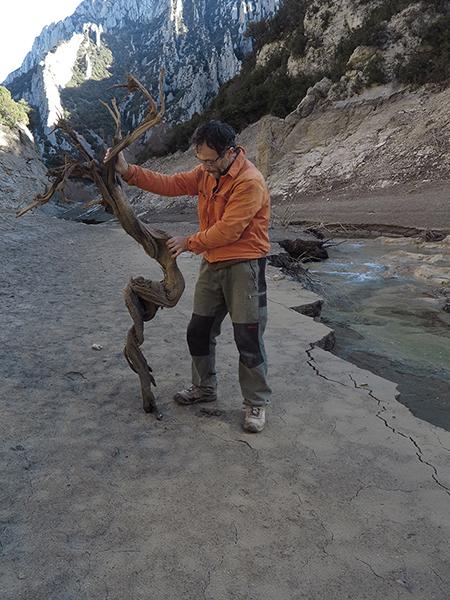 Miguel Ortega, creador de Arbóreo Microdocus, con un ejemplar de sabina negral que estaba enterrado en un pantano de la sierra de Guara (Huesca).