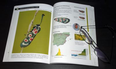 Capítulo dedicado a una de las especies incluidas en la Guía de identificación de las gitanillas ibéricas.