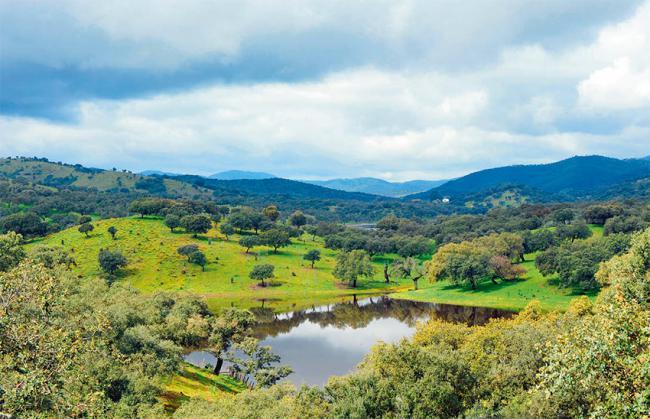 Panorámica de una dehesa de la sierra de Aracena (Huelva). Foto: joserpizarro / 123rf.