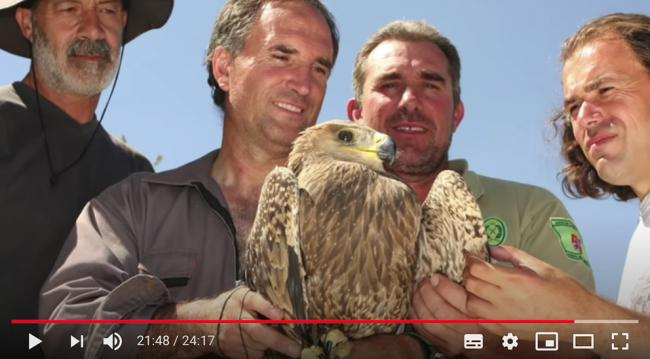 Captura de pantalla del documental en el que se ve al equipo de naturalistas que logró capturar en 2008 en la provincia de Ávila a un pollo híbrido de águila imperial y águila esteparia.