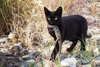 Informe sobre el impacto de los gatos en la fauna canaria