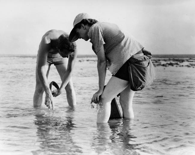 Rachel Carson y su colaborador Bob Hines en 1952, durante un muestreo de fauna costera (foto: Fish & Wildlife Service).