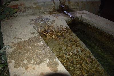 La importancia de los puntos artificiales de agua para la conservación de los anfibios