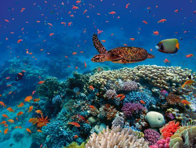 Biodiversidad marina en un arrecife coralino del Mar Rojo frente a las costas de Egipto (foto: Vlad61 / Shutterstock).