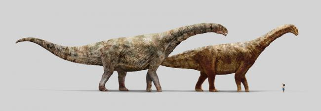 Reconstrucción de los dos turiasaurios gigantes ibéricos: Turiasaurus (izquierda) y Losillasaurus (diseño: Daniel Ayala).