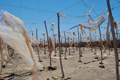 Invernaderos abandonados en las proximidades de un parque eólico en Llanos del Matorral (San Bartolomé de Tirajana). Foto: Daniel González.