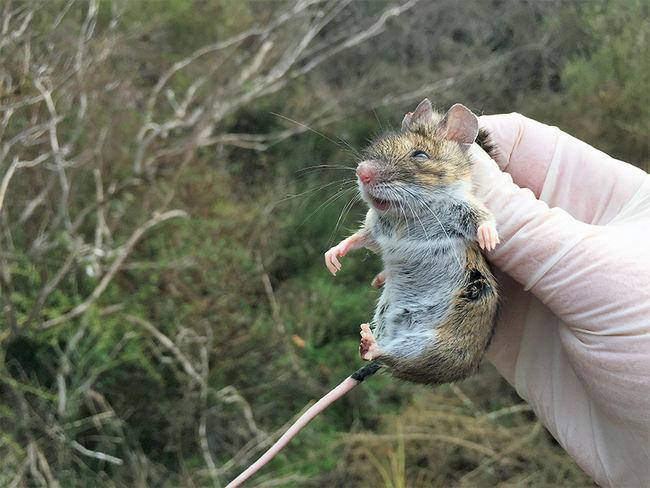 Heráclito y los ratones de Doñana