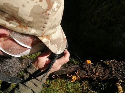Un participante en la Biomaratón de Invierno fotografía al hongo Naematelia aurantia sobre madera en descomposición.