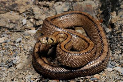 Objetivo: mejorar la imagen de las serpientes en el medio rural
