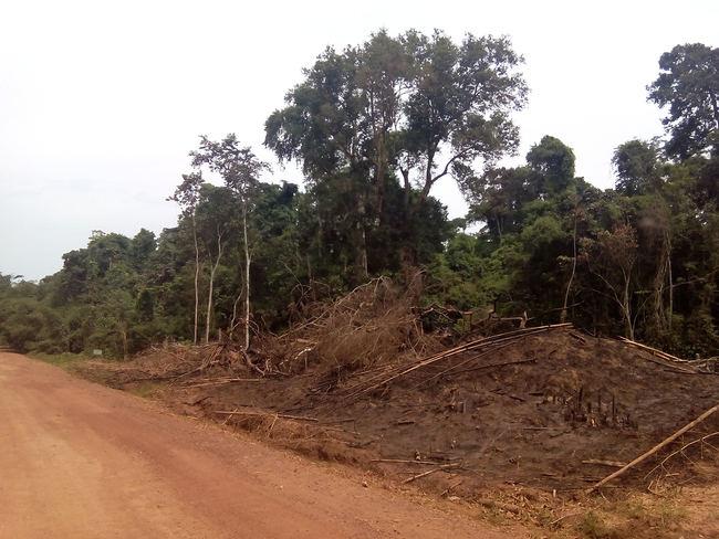 Ejemplo de deforestación de bosque primario en Ghana. El cartel que aparece al fondo marca el final de un parque nacional. La deforestación para la plantación de cacao llega hasta esa misma línea (foto: Sandra Goded).