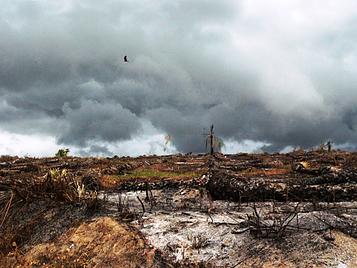 Un milano negro de pico amarillo (Milvus migrans parasitus) sobrevuela una zona recién deforestada para su explotación minera de oro en Ghana (foto: Nico Arcilla).