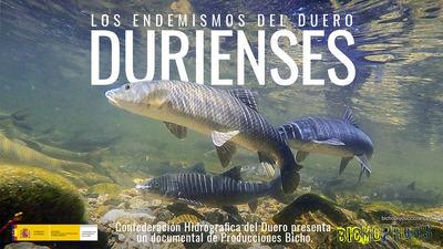 La CHD presenta 'Durienses: Los endemismos del Duero'