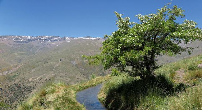Las acequias tradicionales de careo de Sierra Nevada, empleadas para guiar el agua del deshielo y destinarla a regar cultivos, irrigar pastos o surtir fuentes, son un ejemplo de soluciones basadas en la naturaleza (foto: José Miguel Barea).