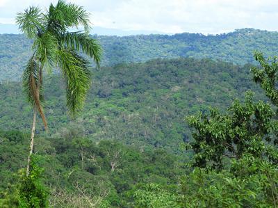 Panorámica del bosque tropical seco de la Concesión para Conservación Ojos de Agua, en el departamento de San Martín (Perú).